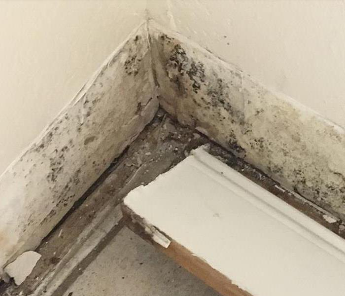 Hidden Mold Damage