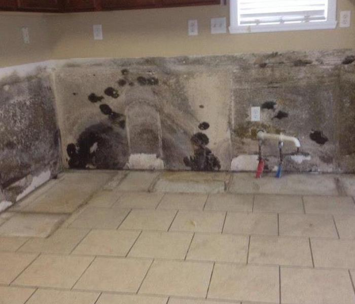 Mold Remediation The most wonderful time of the year is coming, but so is the Mold.