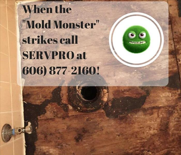 "Mold Remediation Pulaski and Laurel County Residents: Is the ""Mold Monster"" trying to take over your home or business?"